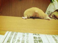Hamster's butt is so cute.