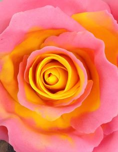 Bi Colour Rose Tutorial- this is a good tutorial!