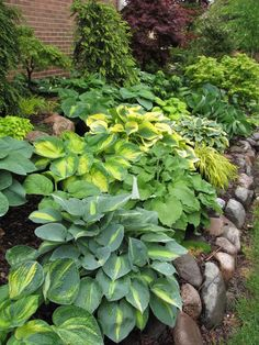 hosta garden....perfect for the shady corner in our backyard, and stones are already laid out so I just have to plant and let them grow!