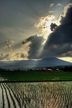 田んぼ(岩手) Rice fields in Iwate Prefecture,  #Japan