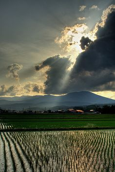 Rice fields in Iwate, Japan - one of the countries i dream about going.