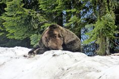 Vancouver's Celebrities @ Grouse Mountain (May 2017)