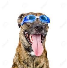 Αποτέλεσμα εικόνας για swim glasses dog