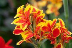 91408 Home Landscaping, Types Of Soil, Growing Plants, Livestock, Gardening Tips, Harvest, Charlotte, Queen, Landscape