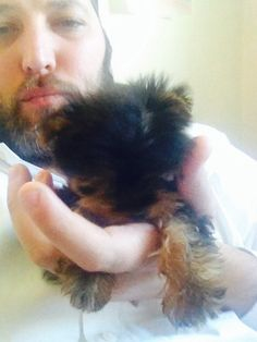 Ultimate Tiny Micro Teacup Yorkie Puppy