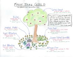 Fruit tree guild: plant in such a way that nature does the maintenance work for you.