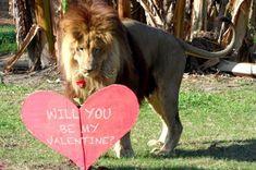 ShapeShifter Seduction: Lion Love In Wolf Peak Territory