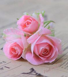 Beautiful Roses, Pretty Flowers, Congratulations Photos, Flowers For Algernon, Mandala Design, Design Art, Thankful, Spring, Creative