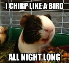 You say time for bed. I say time to serenade you off to sleep. :)