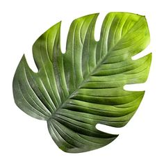 TISCHSET Kunststoff online kaufen ➤ XXXLutz Plant Leaves, Teller, Plants, 3d, Products, Glamour, Rustic Wooden Table, Deco, Plant