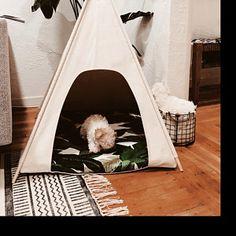 Tipi tijd! De leukste Tipi's voor je hond.