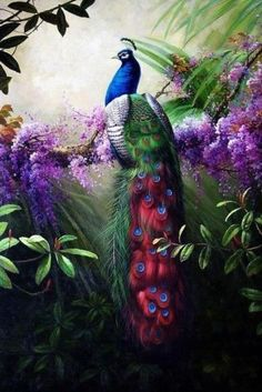 Canvas Print Animals Peacock Oil Painting Picture Printed on Canvas HD93 | eBay