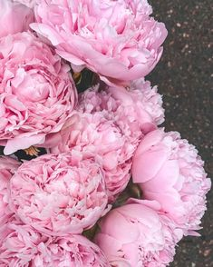 Peonies Bouquet, Rose, Flowers, Plants, Instagram, Pink, Plant, Roses, Royal Icing Flowers