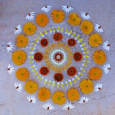 Using the flower petals of carnations, daisies, mums and other wildflowers Arizona-based artist Kathy Klein  creates temporary mandalas in outdoor locations near her home. She calls the pieces danmalas ('the giver of garlands' in Sanskrit), and each piece is photographed and then left to be discovered by others.