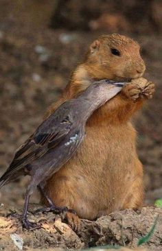 friends -- bird & squirrel share nut. peace on earth goodwill to all