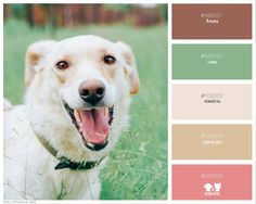 Color scheme palette adoption dog bright light палитра ищу дом сириус brown ivory pink green beige