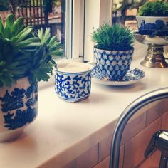 Teacup Garden. I have a huge piece of blue and white ware (an old-style amphora) at home that I'd love to bring to the room for flowers - but having more, smaller ones of the same blue and white porcelain for succulents on the window sill would be great!