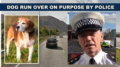 A dog that was running loose on the A55 motorway in North Wales was ran over on purpose by traffic police officers.   In a stat...