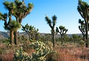 My California roots: Yucca Valley