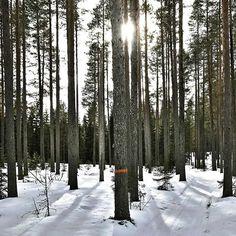 Wald, soweit das Auge reicht.  Ob ihr die markierten Wanderwege in und um Granö nutzt, oder doch lieber querfeldein los stiefelt, ist euch überlassen. Schön ist es überall!