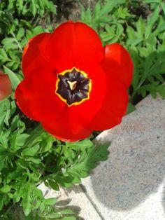 ,, Frühling,, Fotografie A. Botic