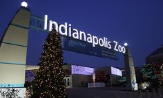 Christmas at the Indianapolis Zoo #Christmas #Indy #Zoo