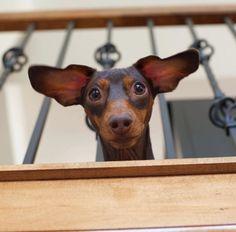 Peek-a-boo...I see you!