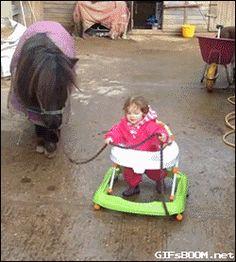 bebe, promener, poney