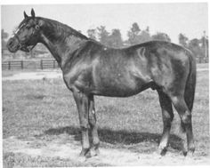 Reigh Count, winner of the Kentucky Derby and sire of Triple Crown winner Count Fleet
