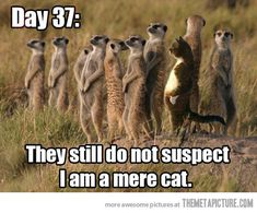 Day 37: They still do not suspect I am a mere cat.