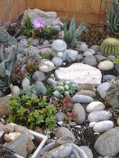 Succulent rock garden! rocks and cacti I can't kill those so this will be perfect lol