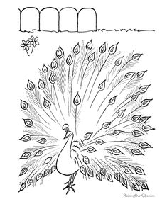 Free printable peacock coloring page... lots of other great coloring pages on the website