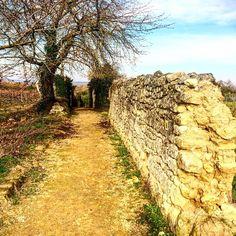 "Saumur Bike Trip (@vinz_junquas_) sur Instagram: ""#loireavelo #loire #troglodyte #saumur #therapy #promenade #loirevalley #soleil #sun #tourism"