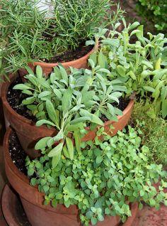 container gardening picture of vertical herb garden