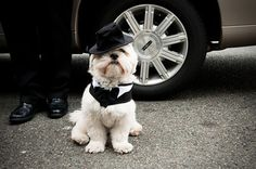 9 Ways to Include Your Pet in Your Big Day