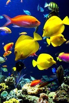 Underwater beauty...