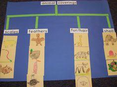 Chalk Talk: A Kindergarten Blog: Nouns and Verbs