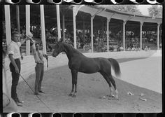[Untitled photo, possibly related to: Entries in the Shelby County Horse Show and Fair, Shelbyville, Kentucky]