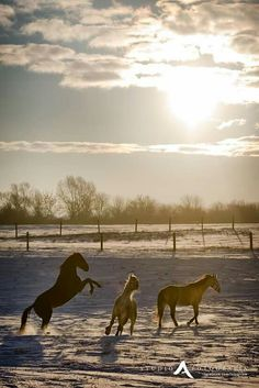 Horse near Gniew.