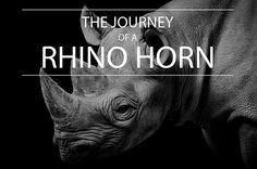 www.sunsafaris.com #africa #wildlife #rhino #antipoaching