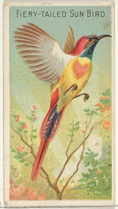 """Trade cards from the """"Birds of the Tropics"""" series (N5), issued in 1889 in a series of 50 cards to promote Allen & Ginter Brand Cigarettes."""