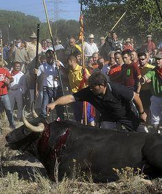 UN MUNDO DESDE EL ABISMO: El Toro de la Vega por el Toro de Falaris