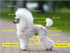Groomers chart**********                                                                                                                                                      More