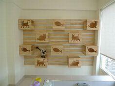 Blog Sobre Caes e Gatos Catswall 2