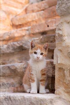 (ू•‧̫•ू⑅)    #neko #cat