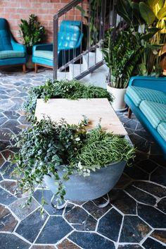 DIY: coffee table (using an old bath & plants!)
