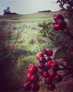 Red berry tastic . Christmas  wishes to @devonsunyarns and thank you for surport in my little bodkin business. # berry #celebratetheseason  #wintersolstice #hawthorn  #devonsunyarns #creativeheads  #naturesinspiration #eastdevon #coastalliving #natureheals #creativebug