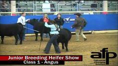 2016 Junior Breeding Heifer Show- Day 2
