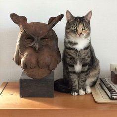 Our wise cat . Potpourri, Sculpture Art, Bookends, Owl, Brass, Home Decor, Decoration Home, Room Decor, Bowl Fillers
