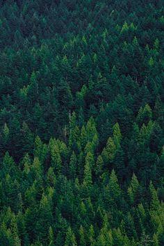#trees #green #wood